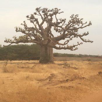 Malreise Senegal Landschaft