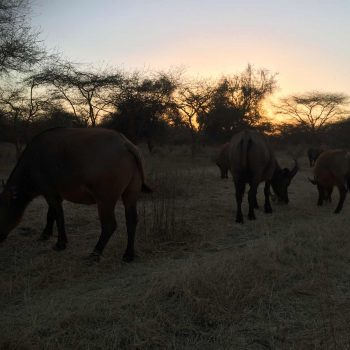 Malreise Senegal Tiere